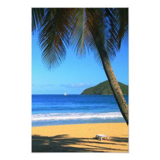 Playa sombreada palma de la isla caribeña impresion fotografica