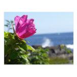 Playa subió postal