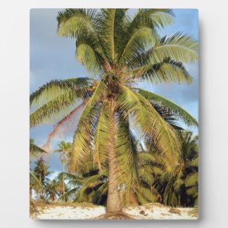 Playa tropical de la palma de coco placas