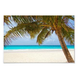 Playa tropical del paraíso cojinete