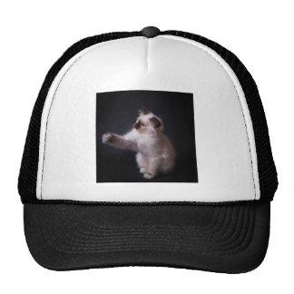 player cat trucker hat