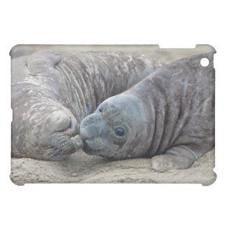Playful Baby Elephant Seals Ipad Mini Case