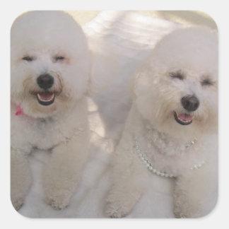 Playful Bichon Pups Square Sticker