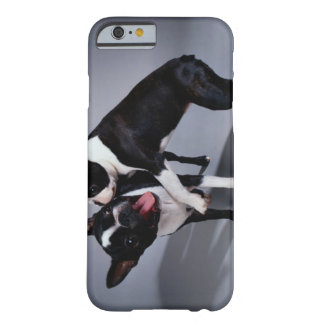 Playful Boston Terriers Barely There iPhone 6 Case