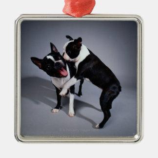 Playful Boston Terriers Metal Ornament