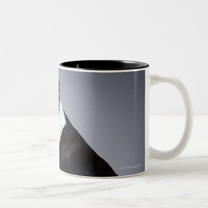 Playful Boston Terriers Two-Tone Coffee Mug