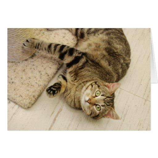 Playful Cat Card