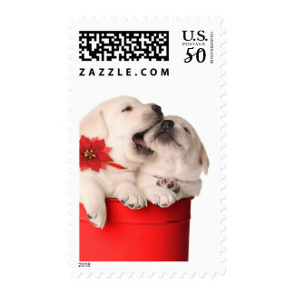 Playful Christmas Puppies In A Red Container Postage
