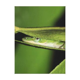 Playful Cute Fun Green Anole Lizard Canvas Print