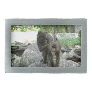 Playful, cute, smart and friendly baboons rectangular belt buckle