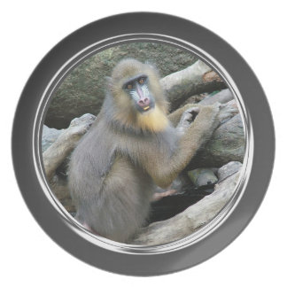 Playful, cute, smart and friendly baboons dinner plate