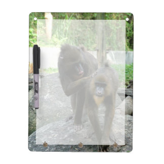 Playful, cute, smart and friendly baboons Dry-Erase boards