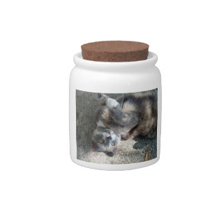 Playful Dilute Tortoiseshell Cat Candy Jars