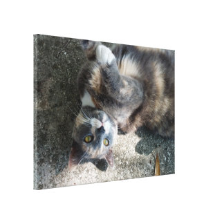 Playful Dilute Tortoiseshell Cat Gallery Wrap Canvas