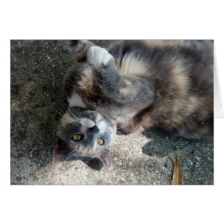 Playful Dilute Tortoiseshell Cat Greeting Card