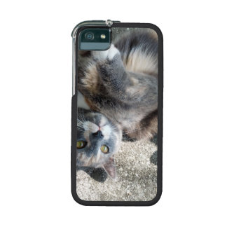 Playful Dilute Tortoiseshell Cat Cover For iPhone 5