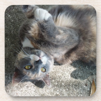 Playful Dilute Tortoiseshell Cat Drink Coasters