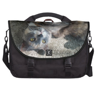Playful Dilute Tortoiseshell Cat Bags For Laptop