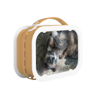 Playful Dilute Tortoiseshell Cat Lunch Boxes