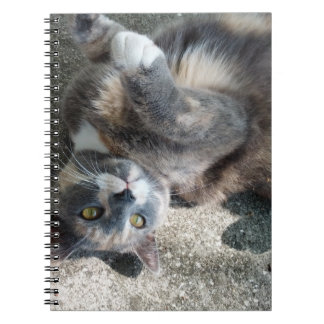 Playful Dilute Tortoiseshell Cat Note Book