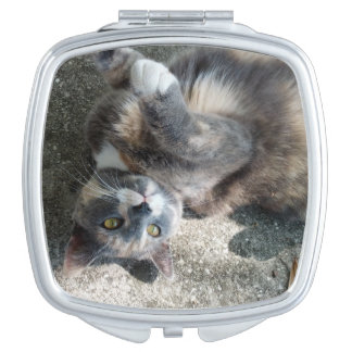 Playful Dilute Tortoiseshell Cat Mirrors For Makeup