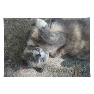 Playful Dilute Tortoiseshell Cat Placemats