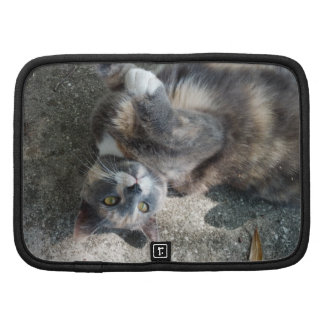 Playful Dilute Tortoiseshell Cat Folio Planners