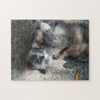 Playful Dilute Tortoiseshell Cat Jigsaw Puzzles