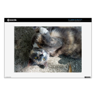 Playful Dilute Tortoiseshell Cat Decal For Laptop