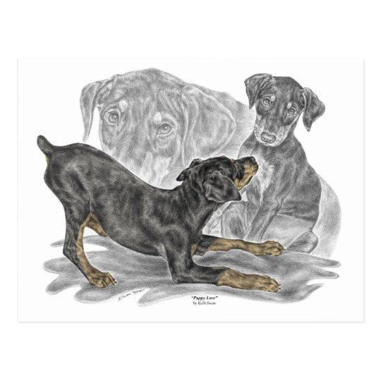 Playful Doberman Pinscher Puppies Postcard