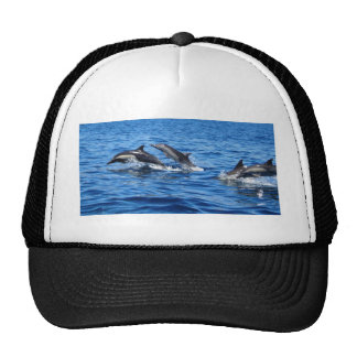 Playful Dolphins Mesh Hat