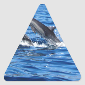 Playful Dolphins Triangle Sticker