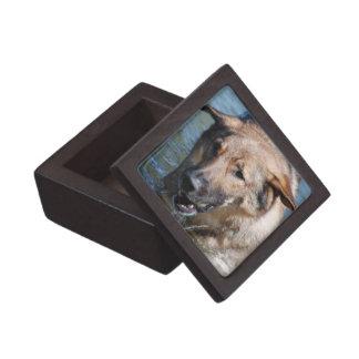 Playful German Shepherd Premium Gift Box