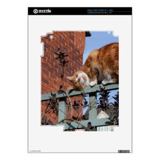 Playful Ginger Cat iPad 2 Decal