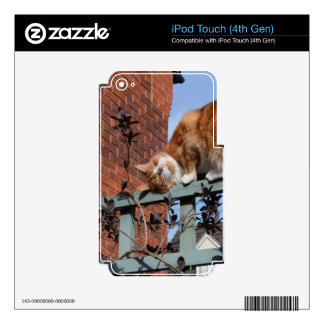 Playful Ginger Cat iPod Touch 4G Decal