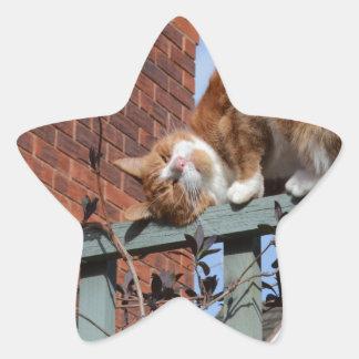 Playful Ginger Cat Star Sticker