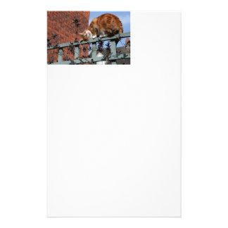 Playful Ginger Cat Stationery