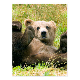 Playful Grizzly Bear Postcard