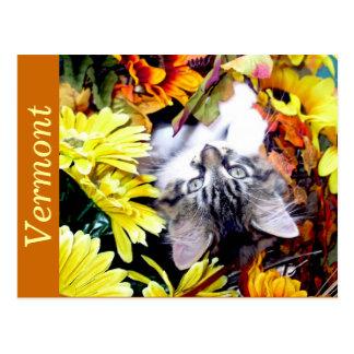 Playful Maine Coon Kitty Cat Kitten Upside Down Postcard