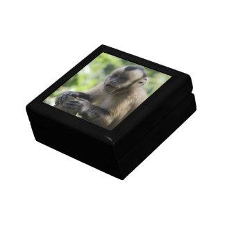 Playful Monkey Gift Box