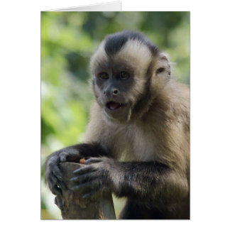 Playful Monkey  Greeting Card