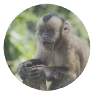 Playful Monkey Plate