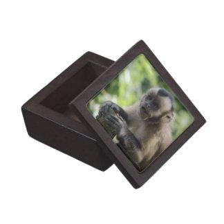 Playful Monkey Premium Gift Box