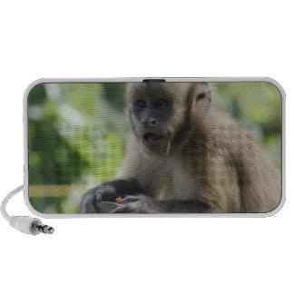 Playful Monkey Speakers
