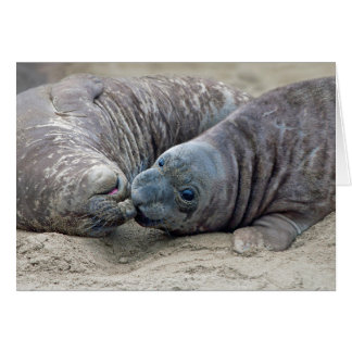 Playful Northern Elephant Seal Pups - San Simeon Card