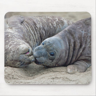Playful Northern Elephant Seal Pups - San Simeon Mouse Pad