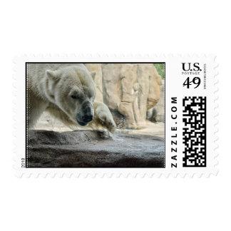 Playful Polar Bear Postage Stamp