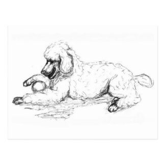 Playful Poodle Postcard