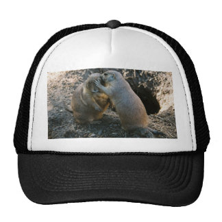 Playful Prairie Dogs Hats
