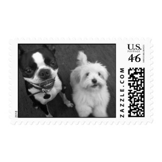 Playful puppies stamp
